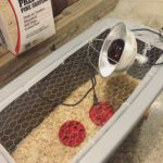 Easy, inexpensive DIY chicken brooder box | Little Red Farmstead
