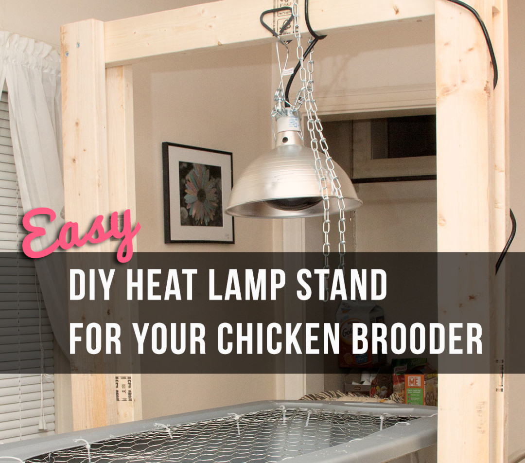 coop ceiling lighting and lamp photo ideas chickens fans for heat chicken