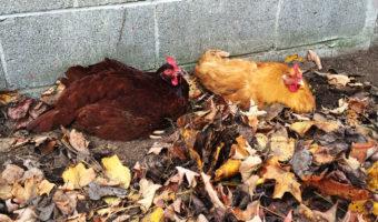 Weekly Farmstead Photos (October 25-31)