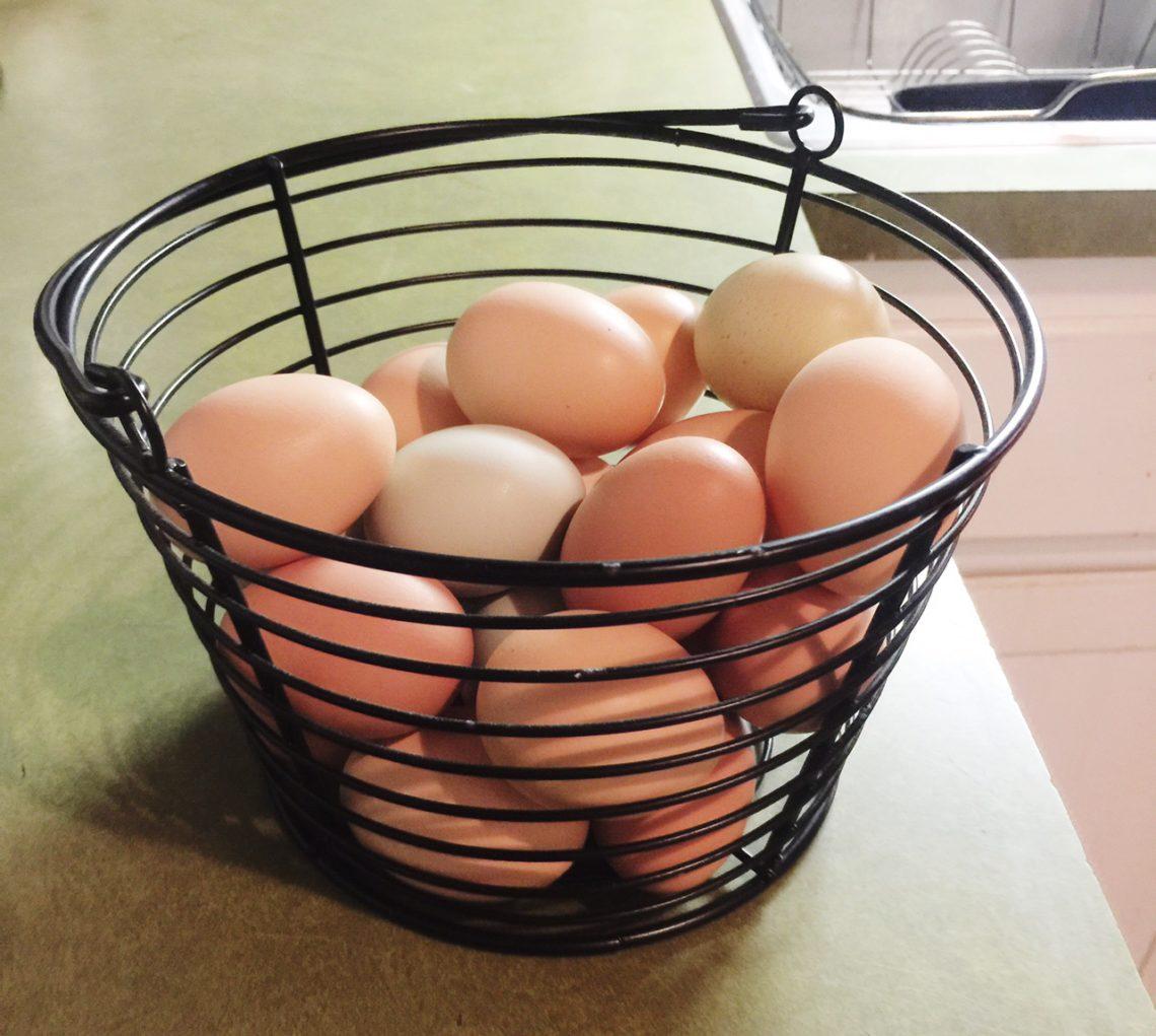 Lots-o-eggs | Little Red Farmstead