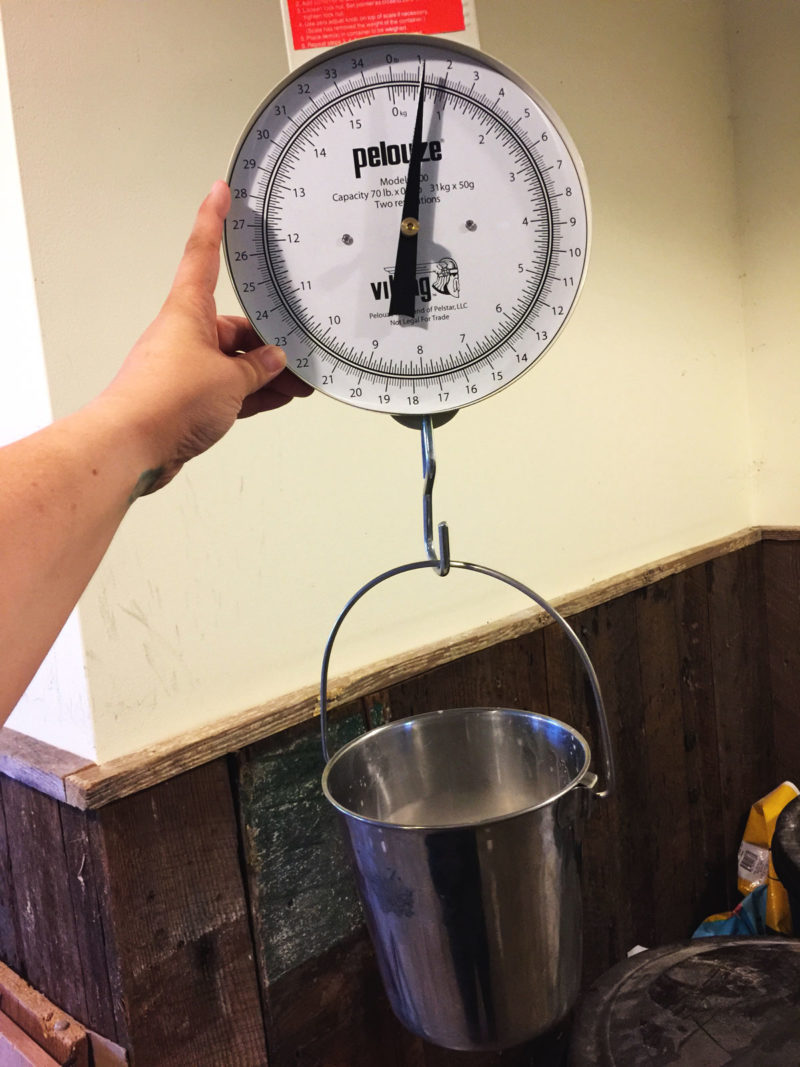 Weighing milk with a hanging scale