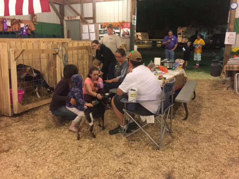 Mike in the goat barn, Albion Fair 2017